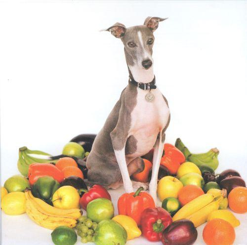 "Shellac - ""Excellent Italian Greyhound"""